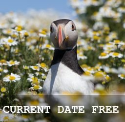 Current Date Free
